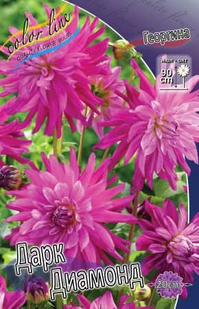 Dahlia Dark Diamond