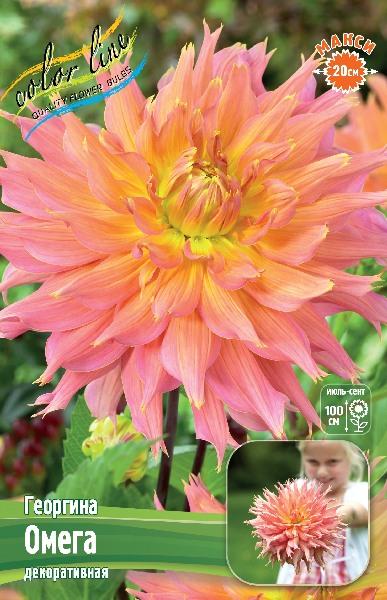 Оп�овая �о�говля голланд�кими л�кови�ами �ве�ов лилии