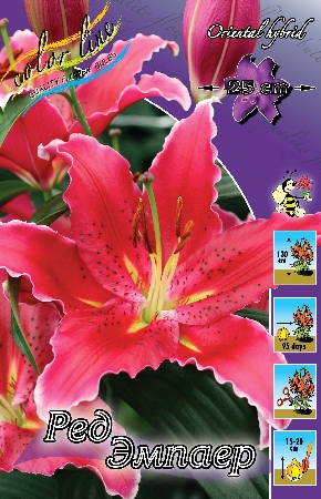 Lilium Red Empire
